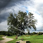 L'albero e la fontana