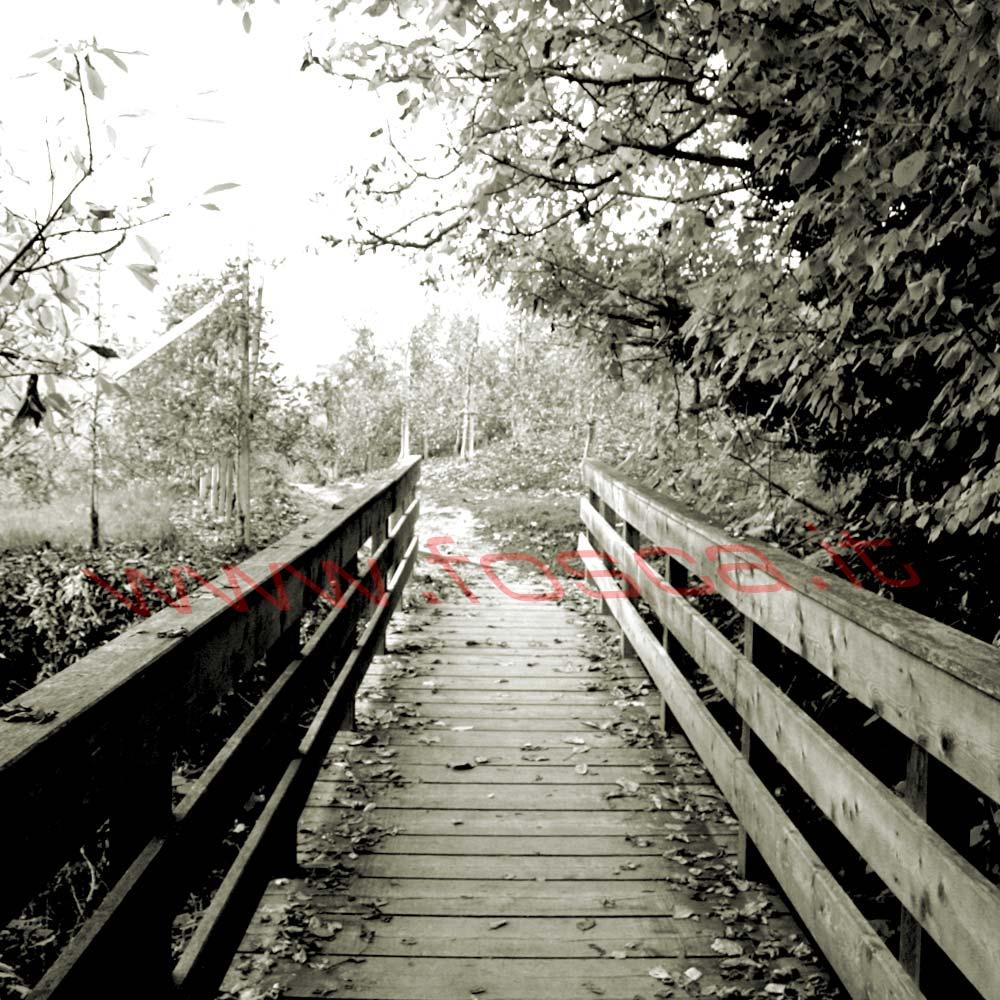 ponte_nel_bosco